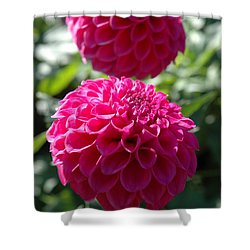 Shower Curtain featuring the photograph Dahlia Xi by Christiane Hellner-OBrien