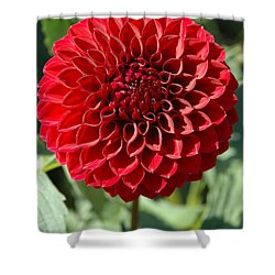 Dahlia Xii Shower Curtain