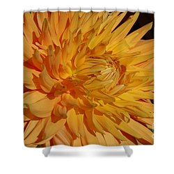 Dahlia Xiii Shower Curtain