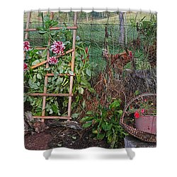 Dahlias And Chickens Shower Curtain by Denise Romano