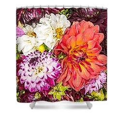 Dahlias Number 4 Shower Curtain