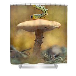 Daily Excercice Shower Curtain by Jaroslaw Blaminsky