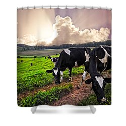 Dairy Cows At Sunset Shower Curtain by Debra and Dave Vanderlaan