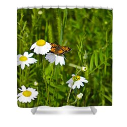 Daisey And Butterfly Shower Curtain by Nick Kirby