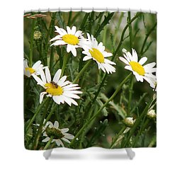 Daisies 1 Shower Curtain