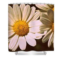Daisies Shower Curtain by Chevy Fleet