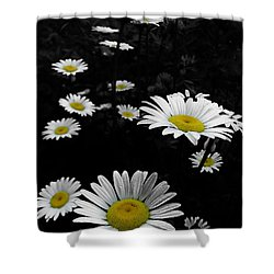 Daisies Shower Curtain by GJ Blackman