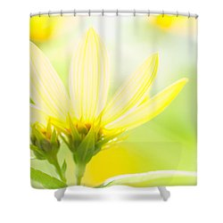 Daisies In The Sun Shower Curtain