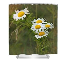 Daisies Shower Curtain by Lena Auxier