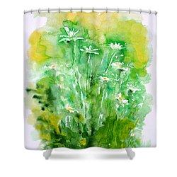 Daisies Shower Curtain by Zaira Dzhaubaeva