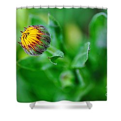 Daisy Bud Ready To Bloom Shower Curtain by Kaye Menner