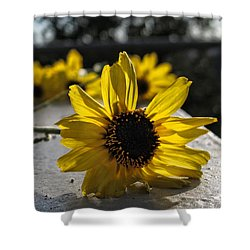 Daisy Daisy Give Me Your Answer Shower Curtain