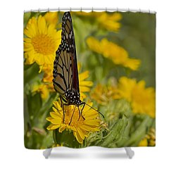 Shower Curtain featuring the photograph Daisy Daisy Give Me Your Anther Do by Gary Holmes
