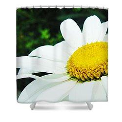 Shower Curtain featuring the photograph Daisy Daisy by Tiffany Erdman