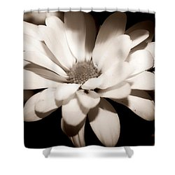 Shower Curtain featuring the photograph Daisy by Debra Forand