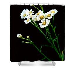Daisy Flower Bouquet  Shower Curtain