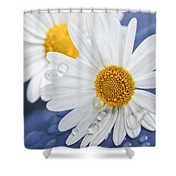 Daisy Flowers With Water Drops Shower Curtain by Elena Elisseeva