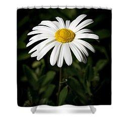 Daisy In The Garden Shower Curtain