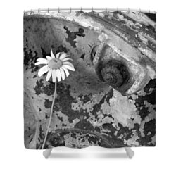 Shower Curtain featuring the photograph Daisy by John Schneider