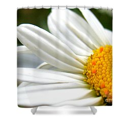 Shower Curtain featuring the photograph Daisy by Patti Whitten