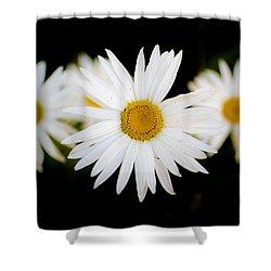 Daisy Trio Shower Curtain