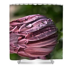 Daisy With Rain Drops Shower Curtain by Joy Watson