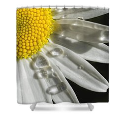 Daisy With Raindrops Shower Curtain by Rob Graham