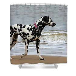 Dalmatian By The Sea Shower Curtain by Gordon Auld