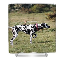 Dalmation Pretending To Be A Pointer Shower Curtain by Gordon Auld