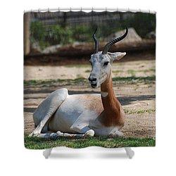 Dama Gazelle Shower Curtain by DejaVu Designs