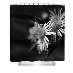 Shower Curtain featuring the photograph Dames En Noir by Linda Shafer