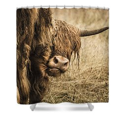 Highland Cow Damn Fleas Shower Curtain