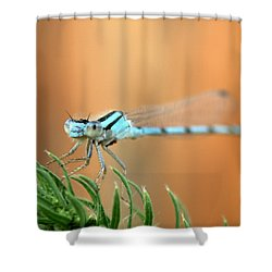 Damselfly Shower Curtain
