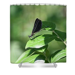 Shower Curtain featuring the photograph Damselfly  by Karen Silvestri