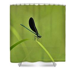 Damselfly  Shower Curtain