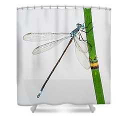 Damselfly On Horsetail Shower Curtain