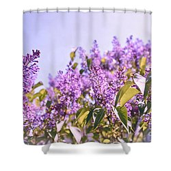 Dance Of The Lilacs Shower Curtain by Colleen Kammerer