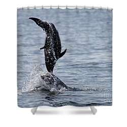Dancing Dolphins Shower Curtain by Bob Hislop