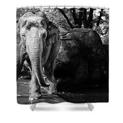 Dancing Elephant Shower Curtain