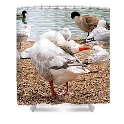 Dancing Goose 2 Shower Curtain by Bob Gross