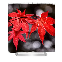 Shower Curtain featuring the photograph Dancing Japanese Maple by Rona Black
