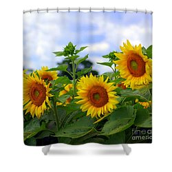 Dancing Sunflowers Shower Curtain by Kathleen Struckle