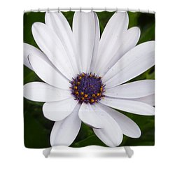 Dancing With The Morning Stars Shower Curtain by Lingfai Leung