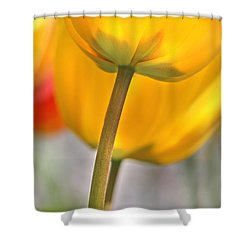 Dancing Yellow Tulip Flowers Shower Curtain by Jennie Marie Schell