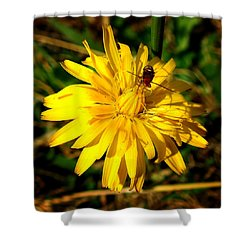 Dandelion And Bug Shower Curtain