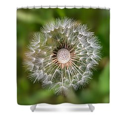 Dandelion Shower Curtain by Carsten Reisinger