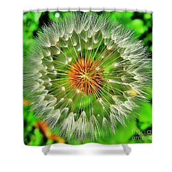 Shower Curtain featuring the photograph Dandelion Circle by John King