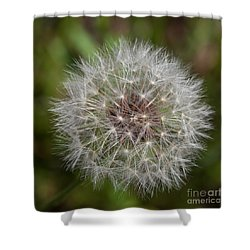 Dandelion Clock Shower Curtain