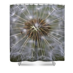Shower Curtain featuring the photograph Dandelion Clock - Seeds. by Clare Bambers