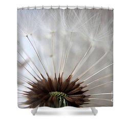 Dandelion Cross Section Shower Curtain